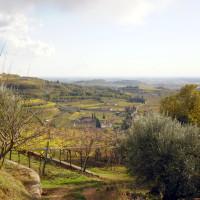 Die Weinberge im Valpolicella